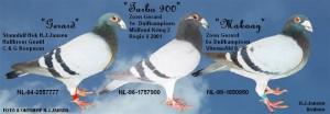 Stamduif Gerard 100% C en G Koopman en zijn 2 superzonen