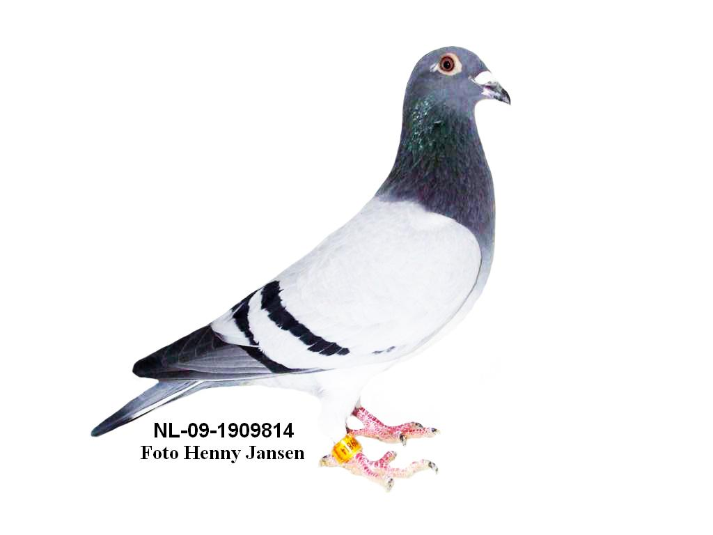 NL-09-1909814---
