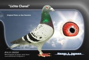 little chanel